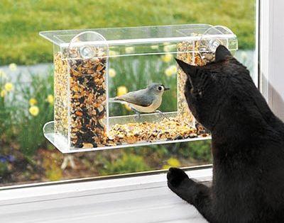 One way mirror bird feeder - it sticks to the window (so