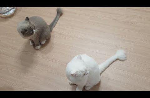까까캔디 까칠냥 Youtube 귀여운 고양이 고양이