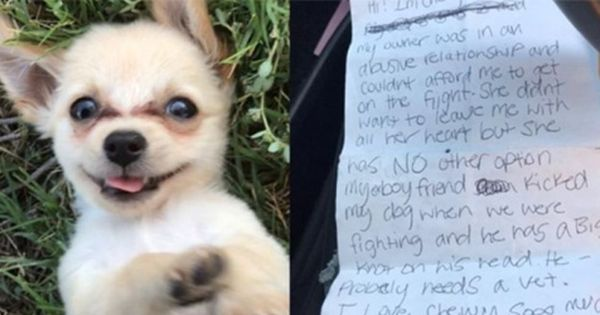 Tiny Puppy Abandoned At Las Vegas Airport Receives A Delightful