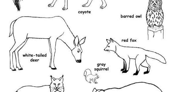 preschool exploring nature coloring pages - photo#11