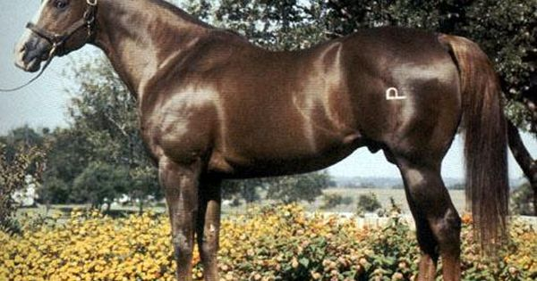 Pedigree and Bloodline Resources - The Ultimate Horse ...