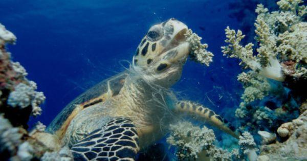 Desert Tortoise Informational Article Comprehension Vocabulary