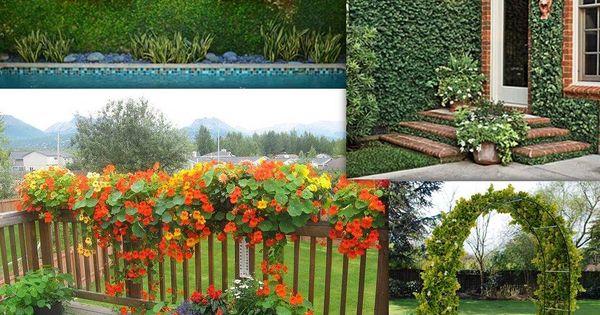 Enredaderas ocupan poco espacio y perfectas para decorar for Jardines verticales para balcones