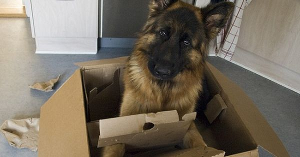 Top 10 Tips For Moving With Dogs Some Really Great Tips On Helping Your Canine Companions Get Through Moving Day And Ge Packing To Move Moving Tips Moving Day