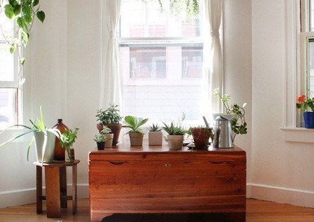 Living With White Walls: Rooms With Plants — Renters Solutions | Apartment