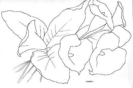 Dibujo Flor Alcatraz Imagui Dibujos Dibujos De Colores