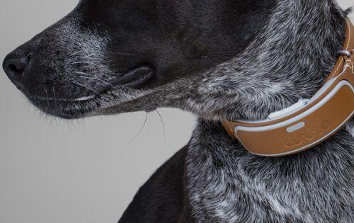 Link Akc Smart Dog Collar Givewaway Smart Dog Cool Pets Dog Life