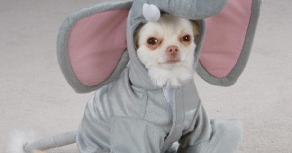 $12.95-$17.99 Casual Canine Wild Safari Animal Gray Dumbo Elephant Halloween Dog Costume