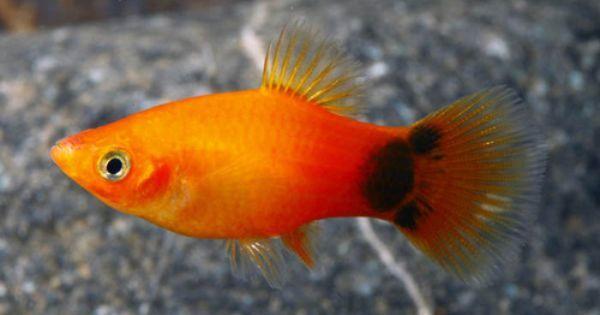 Fish Sweet Photo Aquarium Fish Pet Fish Tropical Fish