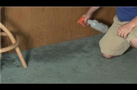 Carpet Cleaning How To Remove Mildew A Musty Smell