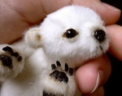 A baby polar bear.awwwwe so sweet...
