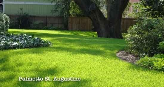 St Augustine Grass Care Florida Fertilizer Lawn Maintenance Schedule Grass Care Lawn Maintenance St Augustine Grass