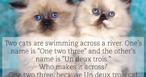 Two-Cats-Swimming-Across-A-River-Joke | Picture Of The DAY ...