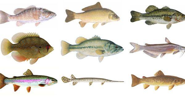 Richmond va james river fish living room pinterest for James river fishing