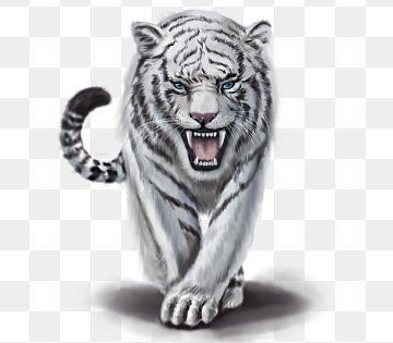 Os Animais Ferozes Animais Tigre Branco Png E Psd Imagem De Tigre Tatuagem De Tigre Branco Animais Ferozes