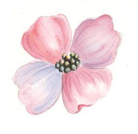 Bluten Malen Mit Aquarellfarben Blumen Malen Blumen Malen Wie