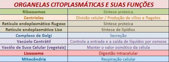 Resumo Sobre As Organelas Citoplasmáticas Nomes Funções E