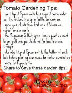 Tomato Gardening Tips High Yield Tomatoes Using Epsom Salt Diy