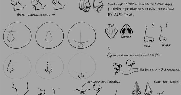Character Design Noses : Test nose tutorial by pandora on deviantart
