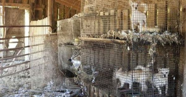 Over 170 Animals Rescued From Alleged Puppy Mill Farms Puppy