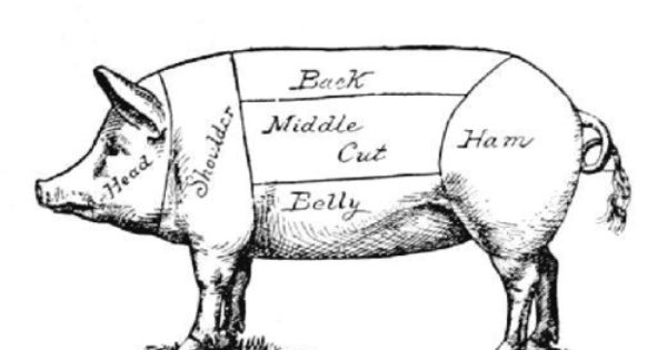 Mr Pig Pig Diagram Pig Illustration Pig