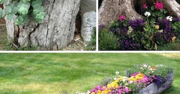 Turn an old tree stump or log into a flower garden.
