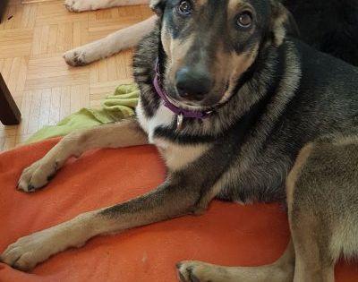 Balu 48 Cm 4 Jahre In 2020 Tiere Tierheim Hunde Hunde