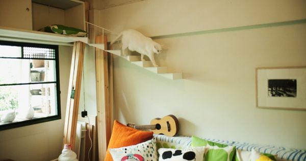 Cat loft appartment. im not a crazy cat person but if i