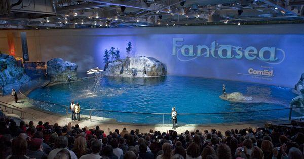 Aquarium, Dolphins and Public on Pinterest