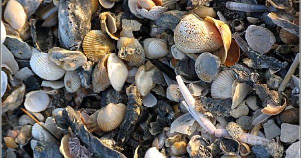 Nags Head Hammocks Myrtle Beach Sc