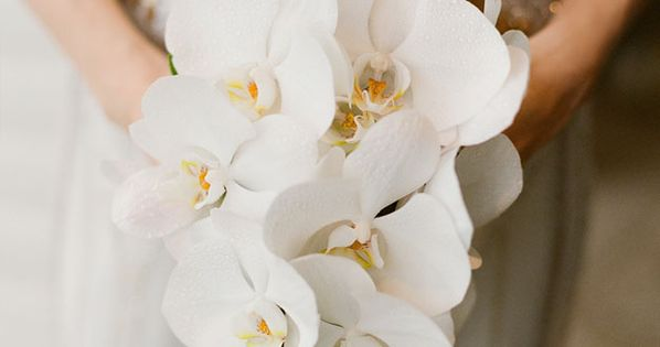 Orchid bouquet - White Orchid bouquet. Photography by Jemma Keech