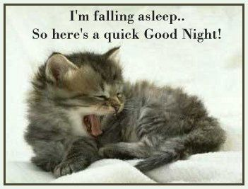 Pin by lisa brooks on weekday quotes | Good night funny, Good night prayer,  Good night cat