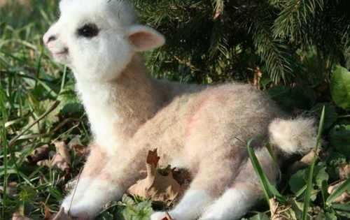 Now that is adorable. Baby llama cute baby animal