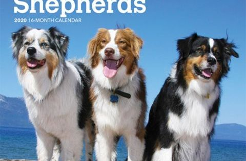 Australian Shepherds 2020 Mini Calendar Australian Shepherd Dog Breeds Dog Calendar