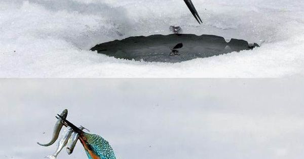 // Icefishing kingfisher