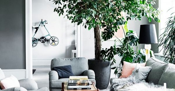 Get the look a lush and cozy gray living room large Large living room plants