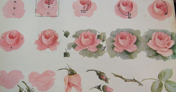 China painting study abc rose study dorothy park step by for How to paint a rose in watercolor step by step