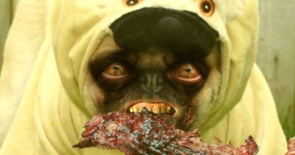 The Walking Dead The Walking Pug Pugs Photoshopped