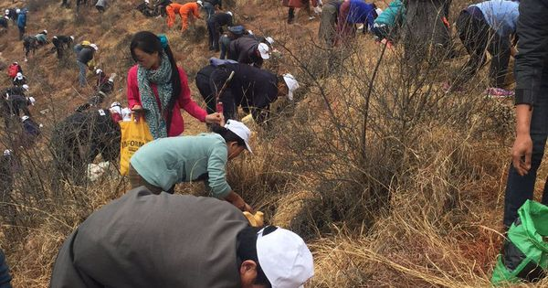 Worlds EcoFriendliest Country Bhutan Celebrates Birth Of New - The most eco friendly country in the world just planted 108000 trees to celebrate a new royal arrival