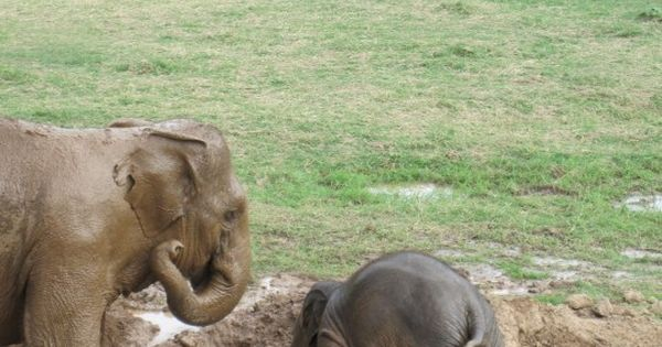 "#mondays. ""Baby elephants throw themselves into the mud when they are upset,"