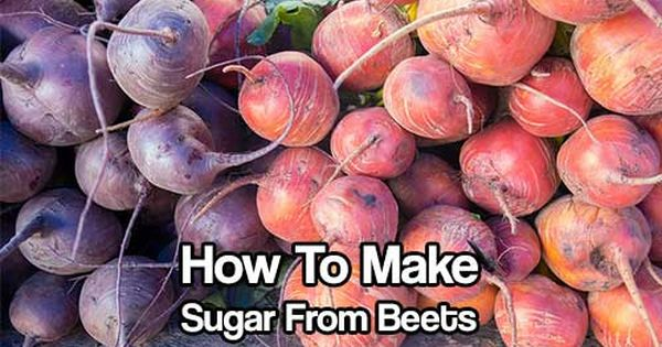 Make Your Own Sugar From Beets Shtf Homesteading Frugal Project How To Diy Today 39 S Craft And