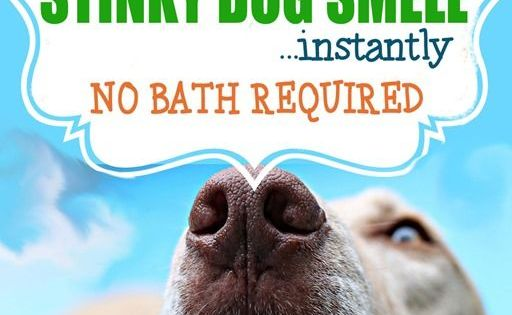 how to get rid of stinky farts