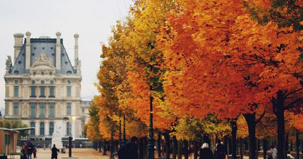 The color of autumn in Paris.
