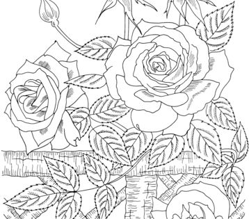 Cinescopio coloring pages of a rose ~ 'America' Climbing Rose coloring page from Roses category ...