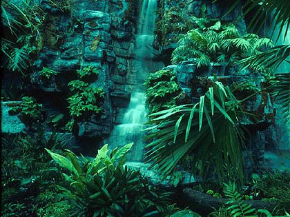 The tropical rainforest biome is mainly found in three ...