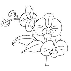 Top 47 Free Printable Flowers Coloring Pages Online Coloring
