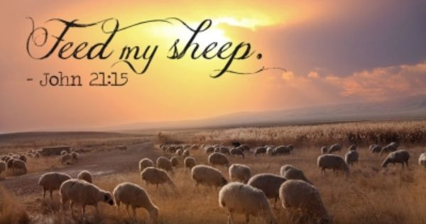 How to be a shepherd and not a sheep herder   Savior ...