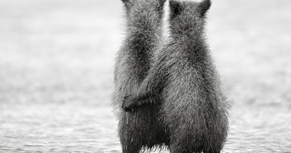 Bear cub best friends