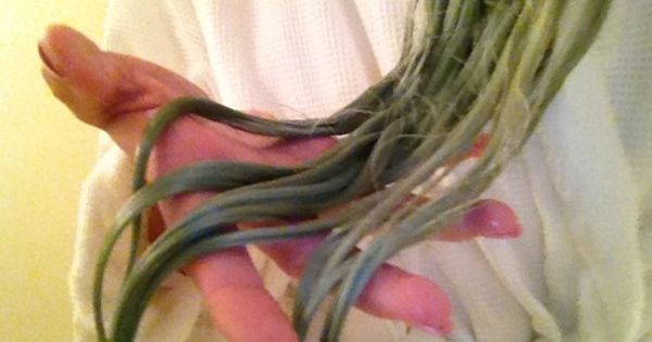 To Remove The Green Hue From Your Hair 1 Try Crushing 5 Aspirin Pills And Add It To 5 Ounces Of Clarifying Shampoo Ash Green Hair Hair Hacks Hot Weather Hair