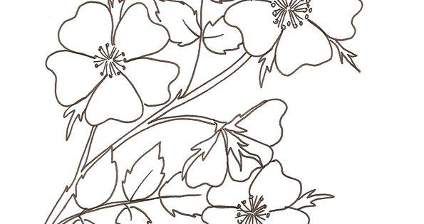 Coloriage d 39 une rose glantine rose sauvage dessin de - Coloriage d une rose ...